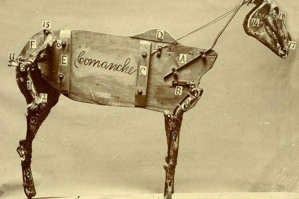 Chadwick Stokes The Horse Comanche Cover